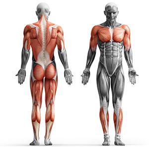 Zestaw gryfów i obciążeń 81 kg - Marbo Sport